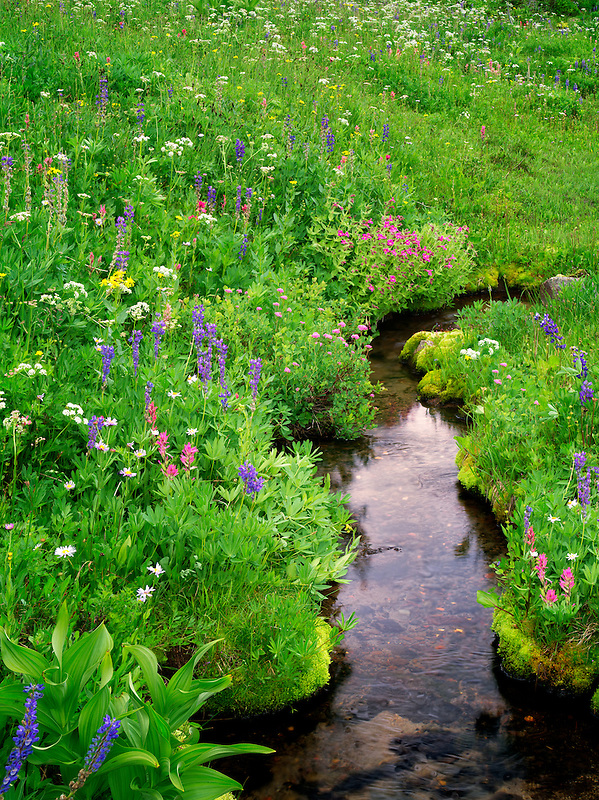 Small stream and wildflowers. Bird Creek meadows. Mt. Adams Wildernesss, Washington