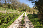 Track running uphill through chalk hillside, Gopher Woods, Huish, Vale of Pewsey, Wiltshire, England, UK