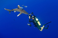 photographer Masa Ushioda photographs oceanic whitetip shark, Carcharhinus longimanus, accompanied by pilotfish ( Naucrates ductor ), open ocean, Hawaii ( Central Pacific Ocean )