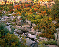 Sunset light on fall color in East Canyon; Castlewood Canyon State Park, CO