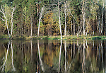 Woodland pond, Prioksko-Terrasny Nature Biosphere Reserve, Russia; mixed forest pine, birch, oak,