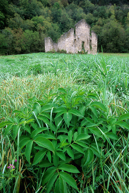 Late summer grasses and plants frame the Old Mill Ruins near Whalen, Minnesota, Fillmore County.