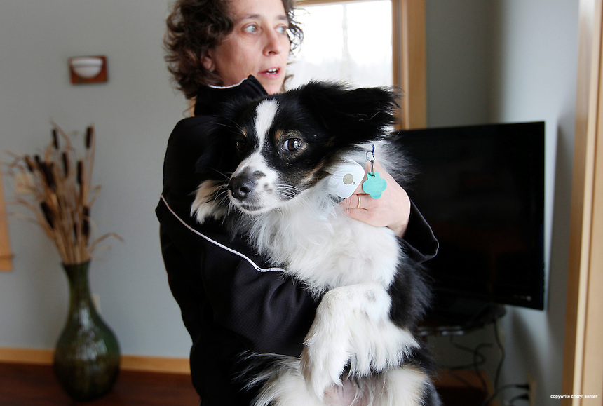 Linda Copson with her dog Lightning, at home in Sugar Hill, NH. Saturday, Jan. 12, 2013. Lightning, who likes to take-off, now wears a GPS tracking collar, called Tagg, seen hanging in collar lower right.  (Cheryl Senter for the Boston Globe)