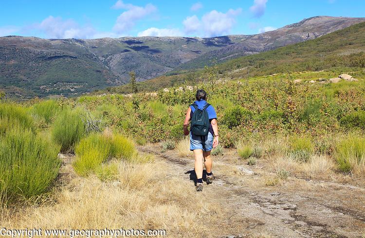 Woman walking Sierra de Tormantos mountains, near Cuacos de Yuste, La Vera, Extremadura, Spain