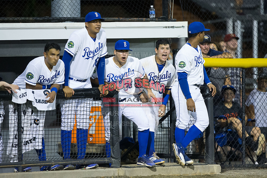 (L-R) Jose Sanchez (6), Carlos Hernandez (16), Andres Sotillet (38), Jesus Atencio (31) and Oliver Nunez (7) root for their teammates from the dugout during the game against the Danville Braves at Burlington Athletic Stadium on August 12, 2017 in Burlington, North Carolina.  The Braves defeated the Royals 5-3.  (Brian Westerholt/Four Seam Images)
