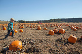 USA, Oregon, Bend, a young boy runs through the pumpkins at the annual pumpkin patch located in Terrebone near Smith Rock State Park