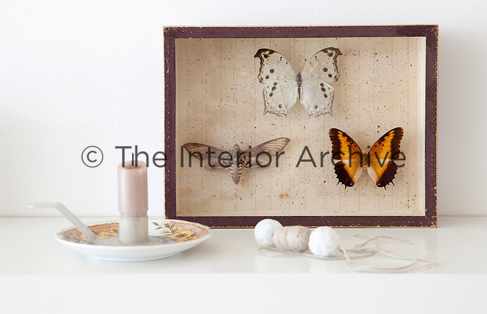 A moth and two butterflies are framed in an old display case, their patternation and colour standing out against the white background