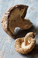 Gastronomie générale: Shiitaké de culture biologique