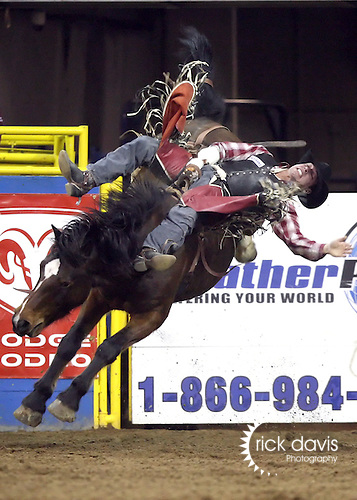 1/23/09--Photo by Rick Davis--PRCA cowboy Dusty LaValley of Crooked Creek, Alberta started out a good ride on the Kesler Rodeo Company bronc Multichem Easy Money during action at the 103rd National Western Stock Show and Rodeo in Denver, Colorado. Dusty scored a 64 point ride and was awarded a re-ride option, which he opted to take later in the performance, resulting in an 80 score.