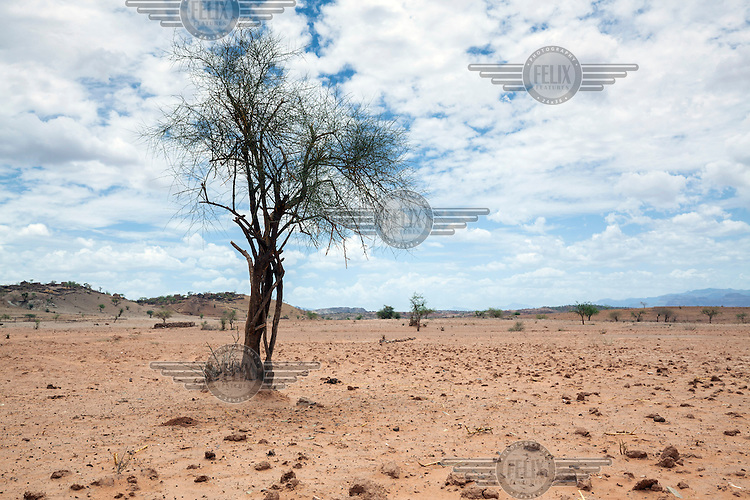 A dry drought affected landscape. <br /> Ethiopia is experiencing its worst drought in over 50 years. The emergency started early in 2015 with the failure of the February-April 'Belg' rains and was further compounded by the main 'Kiremt' rain season (July-September) being erratic and poor, caused by an exceptional El Nino event.