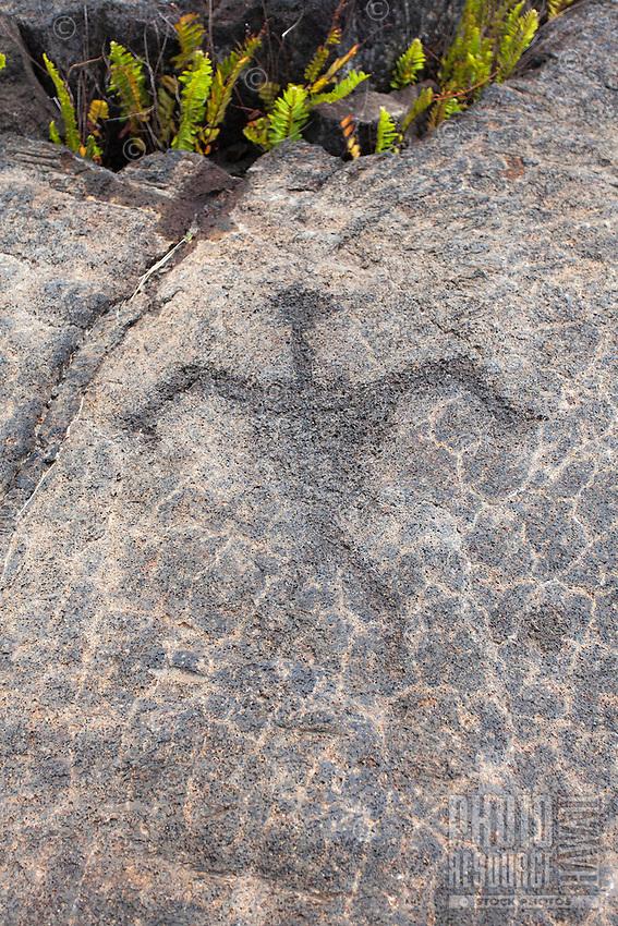 Petroglyph at the Pu'u Loa Petroglyph Field in Hawai'i Volcanoes National Park, Big Island.