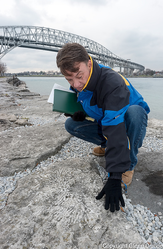 Adam Wisniewski -- Armour stone, lining the banks of the St. Clair River at the Blue Water Bridge, are saturated with ancient fossils.