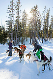 USA, Oregon, Bend, the sled dogs being prepared to go out on a ride at Mt. Bachelor
