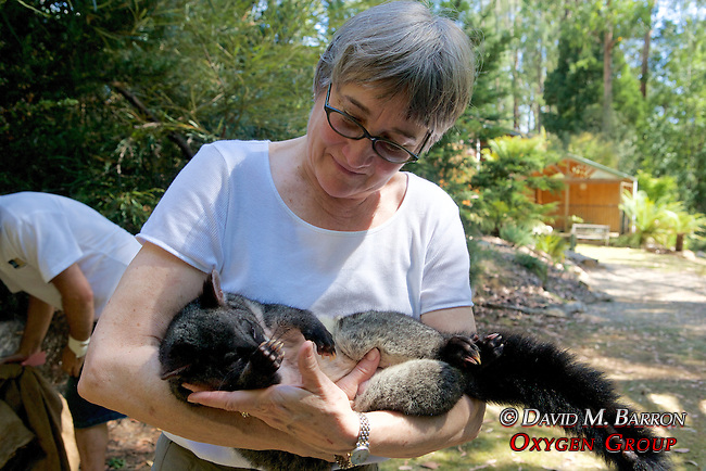 Jeannette Franks Holding Mountain Brushtail Possum