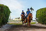 HALLANDALE BEACH, FL - JANUARY 25: Gun Runner with Scott Blasi come off the track to train for Pegasus World Cup Invitational at Gulfstream Park Race Track on January 25, 2018 in Hallandale Beach, Florida. (Photo by Alex Evers/Eclipse Sportswire/Breeders Cup)