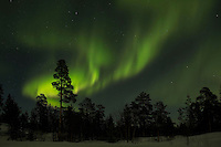 Aurora borealis, Finnish forest, winter