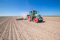 Rolling sugar beet to help seedlings emerge through capped dry conditions - Lincolnshire, April