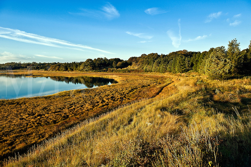 Salt pond and coastal wetlands, Eastham, Cape Cod, MA, Massachusetts, USA