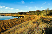 Salt pond and coastal wetlands, Eastham, Cape Cod, MA, Massachusetts, USA