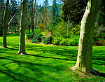 Jackson County, OR     <br /> Sycamore trees align and give shade for spring blossoming trees and shrubs in Lithia Park in Ashford