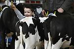 Foto: VidiPhoto<br /> <br /> PUTTEN &ndash; De beste melkoeien van Midden-Nederland togen zaterdag naar Putten om tijdens de zogenoemde fokveedag gekeurd te worden door een deskundige jury. Het jaarlijks terugkerend evenement was dit jaar groter dan ooit, met de aanwezigheid van 90 bedrijven, ruim 200 koeien en kalfjes en 60 agrarische studenten. Uniek voor deze veetentoonstelling is de deelname van de studenten van de agrarische opleiding Aeres (voorheen Groenhorst) uit Barneveld. Behalve dat ze de koeienshow helpen organiseren, samen met de Vereniging Veehouderijbelangen Veluwe-IJsselstreek, nemen zij ook een groot deel van de voorgeleidingen voor hun rekening. De Puttense fokveedag is inmiddels uitgegroeid tot de grootste regionale melkveekeuring van Nederland. Het gaat tijdens de show om de mooiste bouw, de beste uiers en de netste presentatie van het vee. Voor de kinderen was er een onderlinge competitie met kalfjes, waarbij zowel de jeugd als de dieren soms enthousiast struikelden over hun eigen benen.