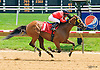 Heidi's Holiday winning at Delaware Park on 6/1/16