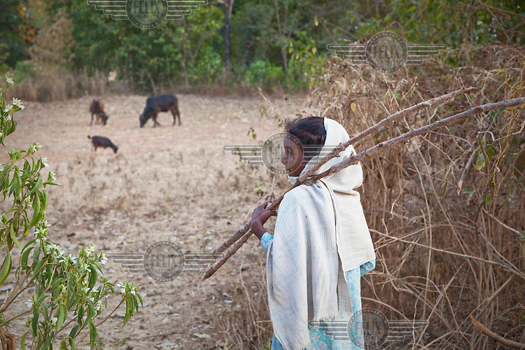 A young shepherdess keeps an eye on her family's cows and goats near Tapkara, an area that is close to Maoist insurgent activities..