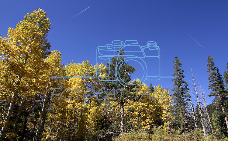Planes fly high above a trail to Scotts Lake above Hope Valley, Ca. near South Lake Tahoe on Wednesday, Oct. 13, 2010. .Photo by Cathleen Allison
