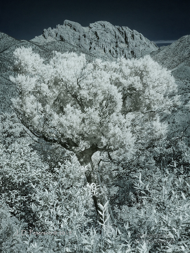 Juniper Tree and Cochise Head Peak, Arizona (Infrared)