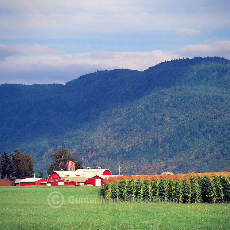 Fraser Valley, Southwestern BC, British Columbia, Canada - Red Barn and Farm Buildings, Corn Field, and Cascade Mountains
