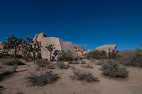 Indian Wave, Joshua Tree National Park, California, US