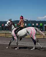 Ashton Old Elk riding white horse with warpaint, Battle of Horse Nation, Indian Horse Relay Racing, Emerald Downs, Auburn, Washington, WA, America, USA.