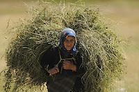 Farmer woman with hay-load. Lake Prespa National Park, Albania June 2009