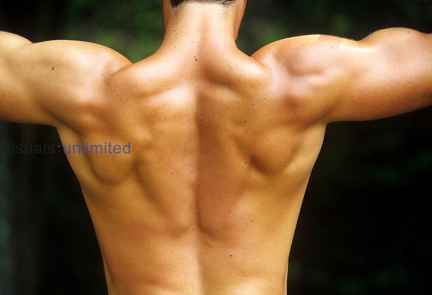 Human back, shoulder, and upper arm muscles, surface view. MRA....