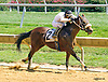 Think He's Gone winning at Delaware Park on 8/20/16