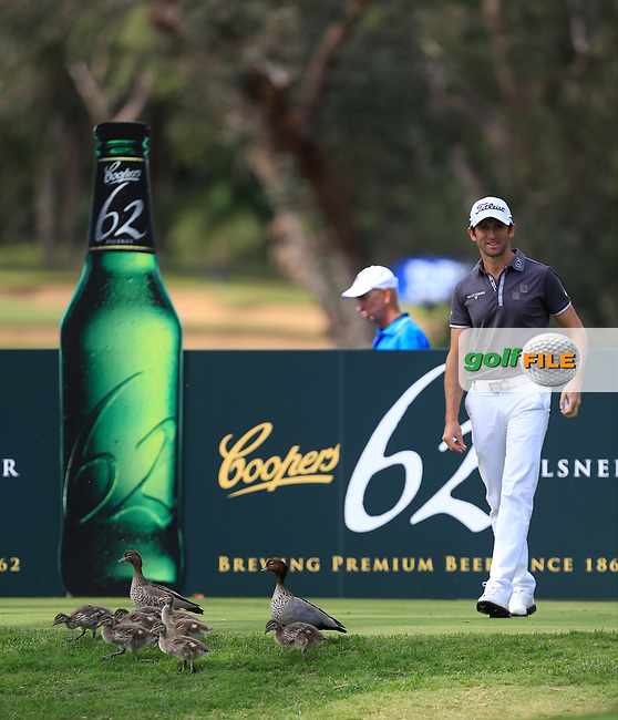 Gregory Bourdy (FRA) escorts the ducks off  the 11th tee during Round 3 of the ISPS HANDA Perth International at the Lake Karrinyup Country Club on Saturday 25th October 2014.<br /> Picture:  Thos Caffrey / www.golffile.ie