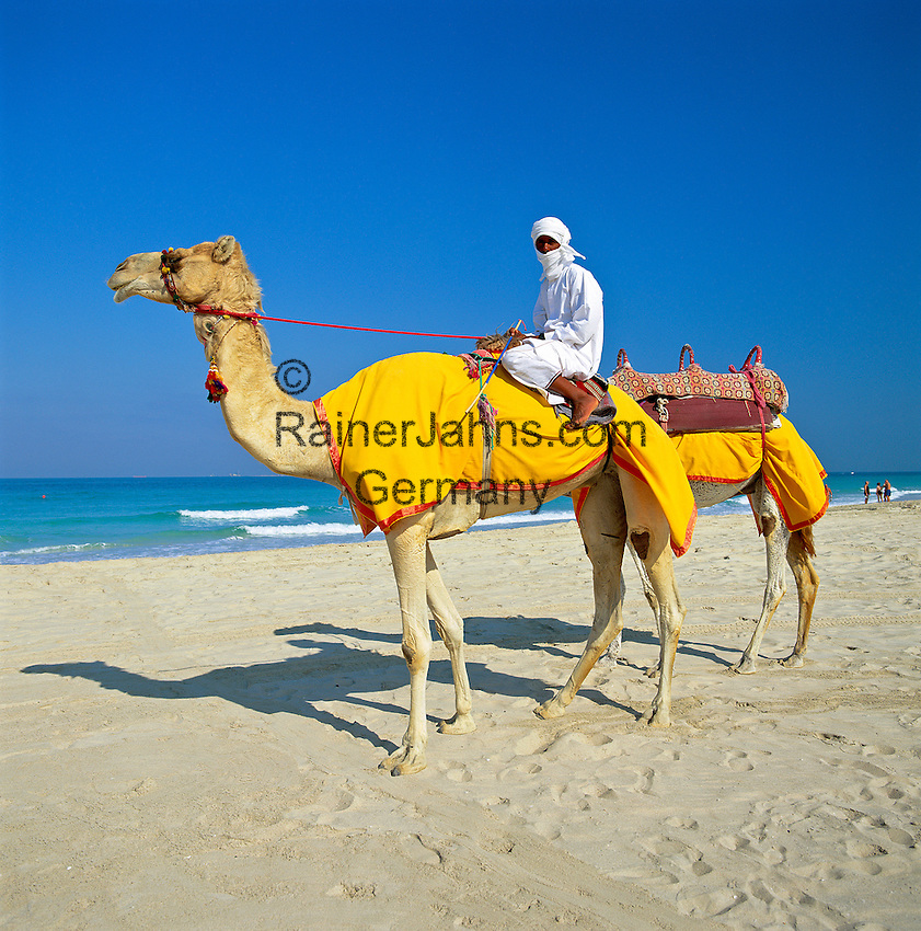 United Arab Emirates, Dubai: Camels & Rider on Beach | Vereinigte Arabische Emirate, Dubai: Dromedar reiten am Strand