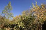 Israel, Tel Aviv-Yafo. The Botanical Ecological Park in Abu Kabir