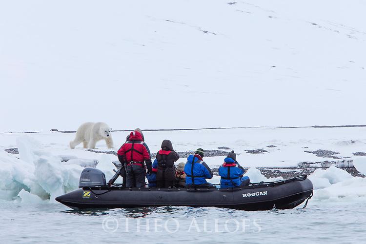 Norway, Svalbard, tourists watching polar bear from Zodiac