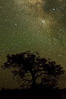 Sternenhimmel mit der Milchstrasse &uuml;ber dem Bryce Canyon, Utah.<br /> 18.6.2017, Bryce Canyon<br /> Copyright: Christian-Ditsch.de<br /> [Inhaltsveraendernde Manipulation des Fotos nur nach ausdruecklicher Genehmigung des Fotografen. Vereinbarungen ueber Abtretung von Persoenlichkeitsrechten/Model Release der abgebildeten Person/Personen liegen nicht vor. NO MODEL RELEASE! Nur fuer Redaktionelle Zwecke. Don't publish without copyright Christian-Ditsch.de, Veroeffentlichung nur mit Fotografennennung, sowie gegen Honorar, MwSt. und Beleg. Konto: I N G - D i B a, IBAN DE58500105175400192269, BIC INGDDEFFXXX, Kontakt: post@christian-ditsch.de<br /> Bei der Bearbeitung der Dateiinformationen darf die Urheberkennzeichnung in den EXIF- und  IPTC-Daten nicht entfernt werden, diese sind in digitalen Medien nach &sect;95c UrhG rechtlich geschuetzt. Der Urhebervermerk wird gemaess &sect;13 UrhG verlangt.]
