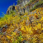 Bracken Fern, Pteridium aquilinum, Devil's Postpile National Monument, Inyo National Forest, Eastern Sierra, Sierra Nevada Range, California ,