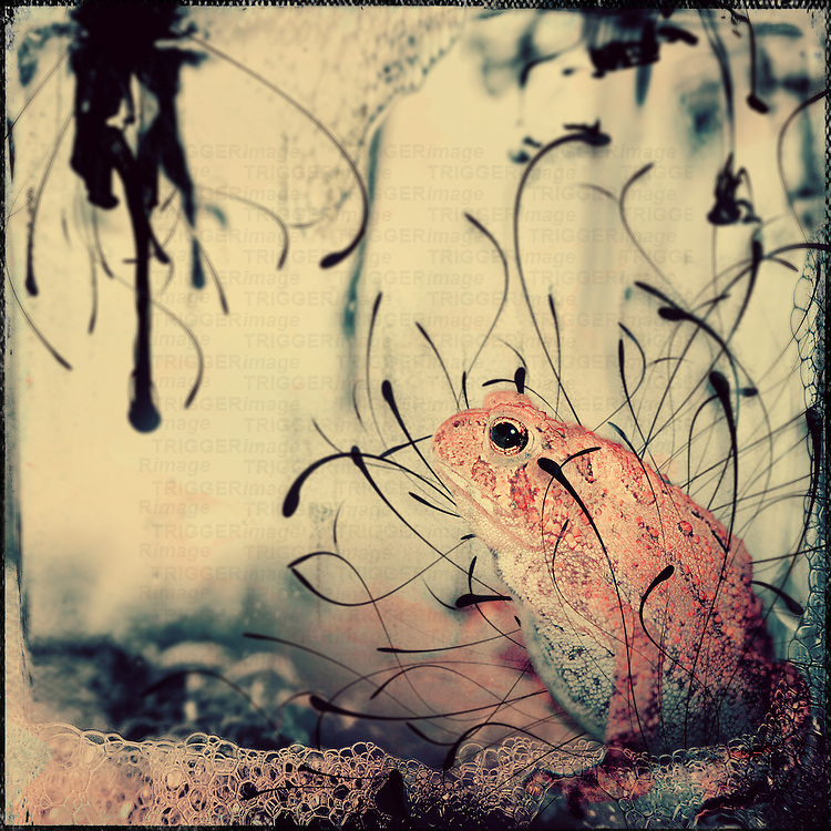 Orange frog in fishtank with black ink