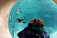 A boy take pictures look the penguins through a porthole.<br /> Nine pairs of African Penguins, also known as the jackass penguin and black-footed penguin, were welcomed by Rome's biopark. <br /> Roma 27-12-2018 Bioparco <br /> Foto Andrea Staccioli / Insidefoto