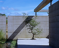 The minimal concrete terrace is Japanese in style with an ornamental tree and pond