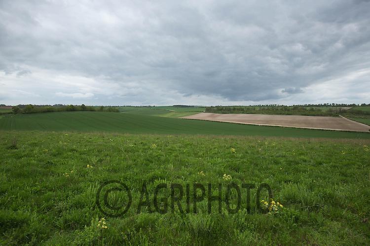 Farming landscape in Hertfordshire<br /> Picture Tim Scrivener 07850 303986