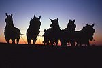 Mule team with Amish boy, sunset silhouette, Lancaster, PA