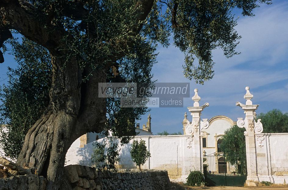 Europe/Italie/La Pouille/Env de Fasano: La Masseria Maccarone et ses oliviers millénaires
