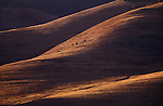 Sun and shadows on rolling hills in the National Bison Range