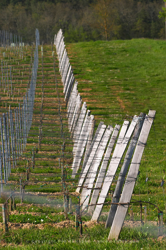 vineyard wires and end posts chateau pey la tour bordeaux france