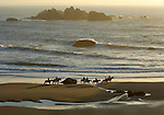 Horseback riding at Bandon Beach, OR